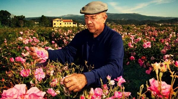 chanel parfum dari bunga mawar